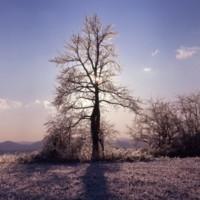 Tree and Ice Shenandoah Valley c1977