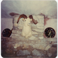 Mounted Big Horn Sheep, Trophy on Rock Fireplace in Ripshin (Sherwood Anderson House)