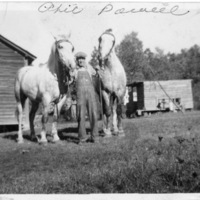 Phil Parnell Standing with Two Light-Colored Horses