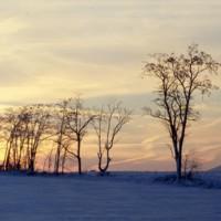 Tree Line Sunset Shenandoah Valley c1979