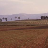 Shenandoah Valley II c1979